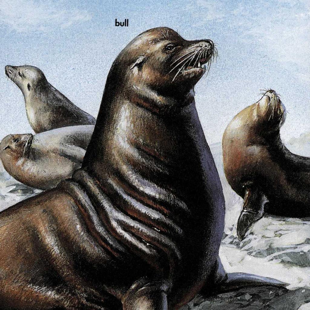 Marine mammals pictures - photo#36