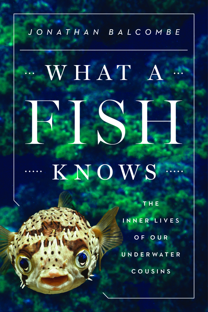 what a fish knows jonathan balcombe macmillan